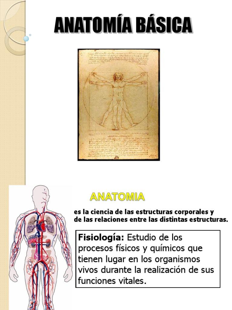 Anatomia Basica y Sistema Respiratorio