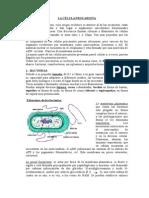 Célula procariota 2