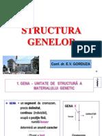 Curs 3 MG Structura Genei