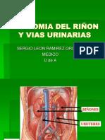 Anatomia Riñon