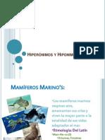Hiperónimos y Hiponimos- Massiel