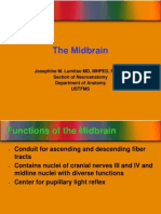 The Midbrain 2
