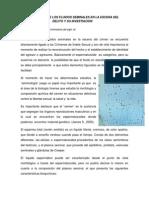 fluidos seminales (1) (1)