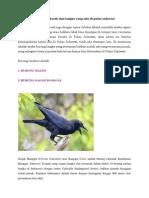 6 Burung Eksotis Dan Langka Yang Ada Di Pulau Sulawesi