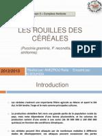 1 Les ROUILLES DES Céréales (Amezrou Reda)