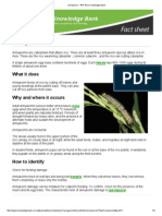 Armyworm - IRRI Rice Knowledge Bank