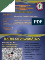 LLANQUI CALSIN Luis Pascual (Matriz Citoplasmatica)