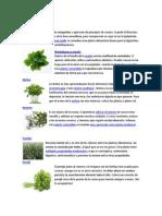 Plantas Comestible s