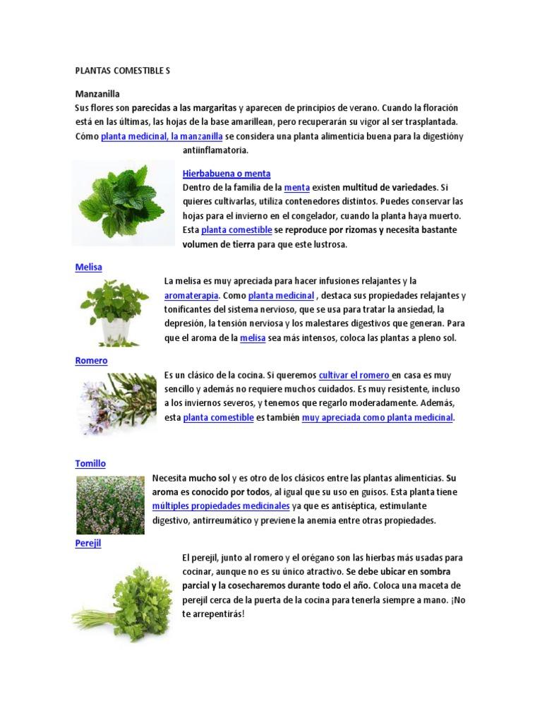 planta perejil pregnancy que se utiliza