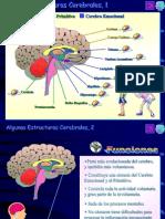2.El_cerebro (1)