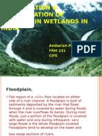Conservation and Rehabilitation of Flood Plain