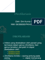 Dirofilaria.pptx