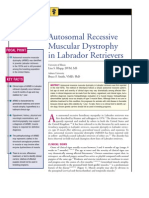 CANINE-Autosomal Recessive Muscular Dystrophy in Labrador Retrievers