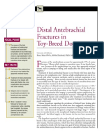 CANINE-Distal Antebrachial Fractures in Toy-Breed Dogs