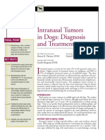 CANINE-İntranasal Tumors in dogs-Diagnosis and Treatment