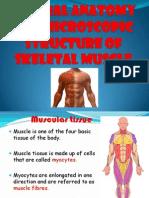Muscular & Vascular Tissue