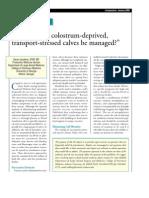 How Should Colostrum-Deprived,Transport-stressed Calves Be Managed