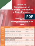 Sitios de Venopuncion en Animales