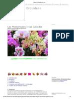 Cuidar las Orquídeas en casa.pdf