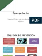 Prevención de Campyrobacter