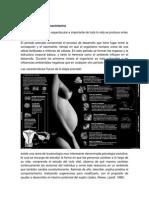 etapas del desarrollo humano.docx