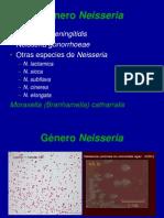 NEISSERIA (1).ppt