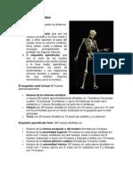 esquema_Division_esqueleto.pdf
