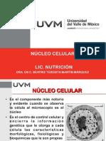 Núcleo celular.pdf
