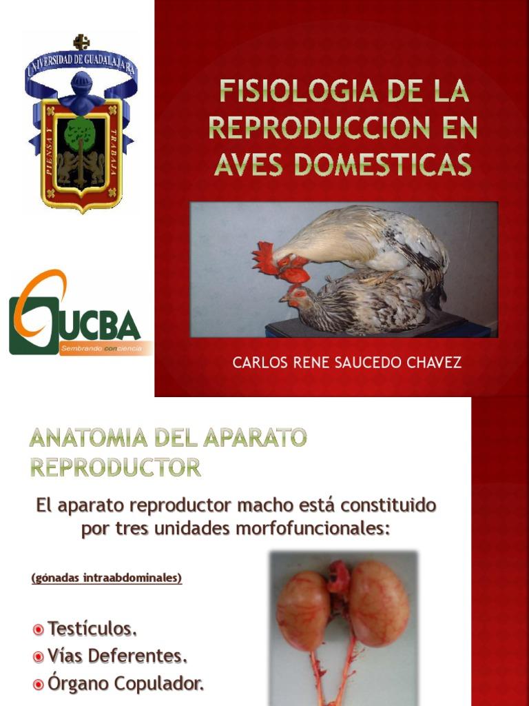 FISIOLOGIA DE LA REPRODUCCION EN AVES DOMESTICAS.pdf