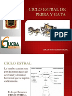 CICLO ESTRAL.pptx