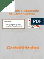212936762-Digestion-y-Absorcion-de-Carbohidratos-E.pptx