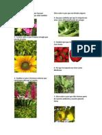 La principal Razón de por que hay que Cuidar las plantas.docx