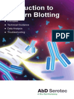 Introduction to Western Blotting