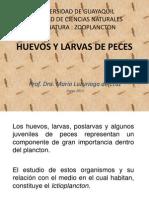 1HUEVOS Y LARVAS DE PECES.pdf