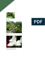 Aimales y Plantas en Peligro de Extincion
