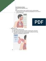 Anats-RespiratorySystemNotes