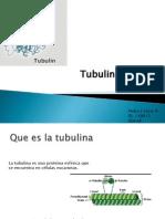 Yoris Navarro Pedro Jose Tubulina