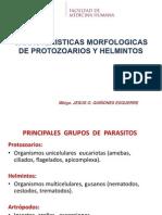 Caracteristicas Morfologicas de Protozoarios y Helmintos