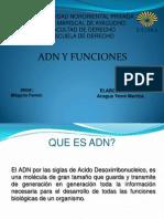 Adn y Sus Funciones Medicina Legal (Yenni)