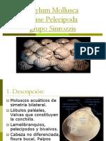 Clase Pelecipoda