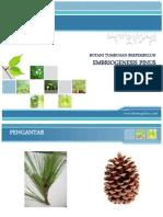 Embriogenesis Pinus