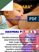 payudara1
