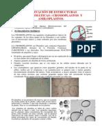 Observacion de Cromoplastos y Amiloplastos