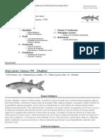 FAO Fisheries & Aquaculture - Cultured Aquatic Species Fact Sheets - Mugil Cephalus (Linnaeus, 1758) (1)