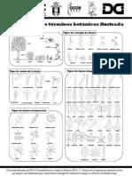Guía Rápida d Términos Botánicos Ilustrados