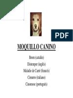 Mo Quillo