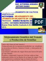 Mejoramiento g. Del Jitomate