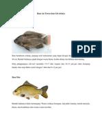 Ikan Air Tawar Dan Ciri