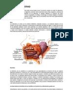 Resumen Fisiologia Del Sistema Digestivo
