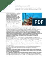 Cultivo de la Langosta Australiana.pdf